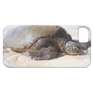 Green sea turtle Chelonia mydas) on the beach in iPhone 5 Case