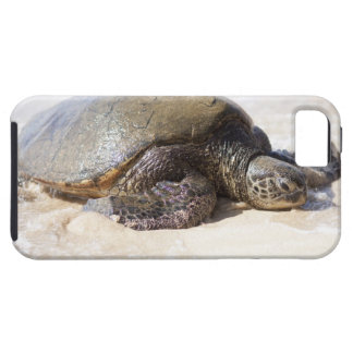 Green sea turtle Chelonia mydas) on the beach in iPhone 5 Cases