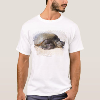 Green sea turtle Chelonia mydas) on the beach in T-Shirt