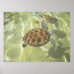 Green Sea Turtle Glide Poster