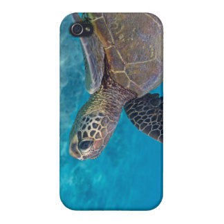 Green Sea Turtle iPhone 4/4S Cases
