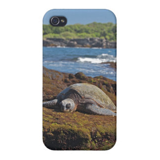 Green Sea Turtle iPhone 4/4S Covers