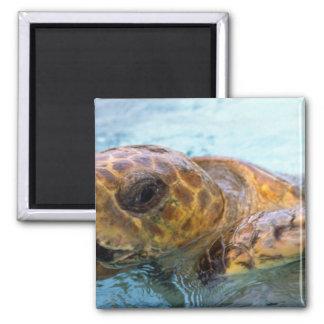 Green sea turtle magnets