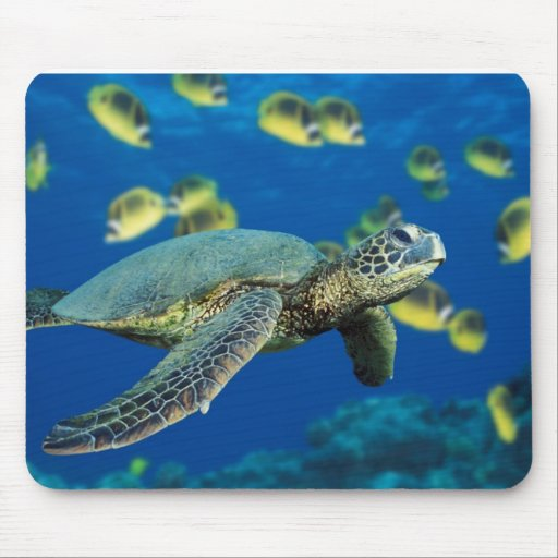 Green Sea Turtle Mouse Pads