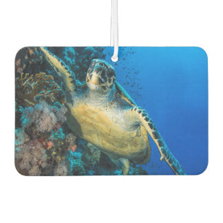 Green Sea Turtle | Red Sea