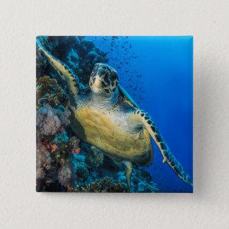 Green Sea Turtle | Red Sea 15 Cm Square Badge