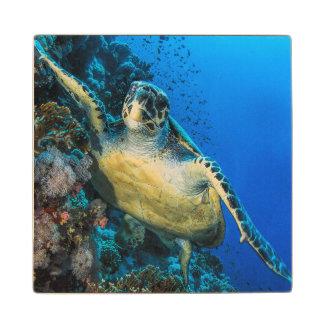 Green Sea Turtle | Red Sea Maple Wood Coaster
