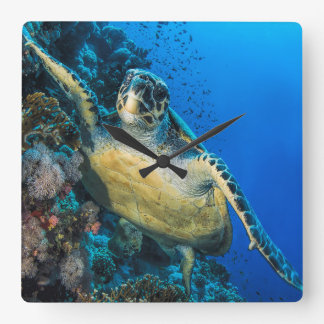 Green Sea Turtle | Red Sea Wall Clock