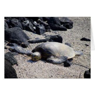 Green Sea Turtle Sunning Itself, Hawaii, Card