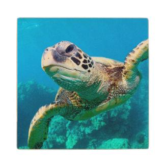 Green Sea Turtle Swimming Over Coral Reef |Hawaii Maple Wood Coaster