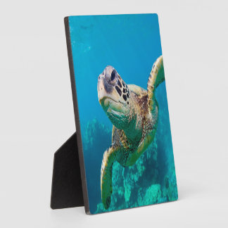 Green Sea Turtle Swimming Over Coral Reef |Hawaii Plaque
