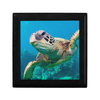 Green Sea Turtle Swimming Over Coral Reef |Hawaii Small Square Gift Box