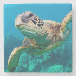 Green Sea Turtle Swimming Over Coral Reef |Hawaii Stone Coaster