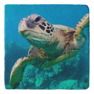 Green Sea Turtle Swimming Over Coral Reef |Hawaii Trivet