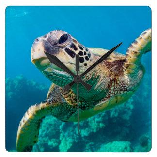 Green Sea Turtle Swimming Over Coral Reef |Hawaii Wall Clock
