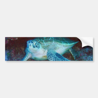 Green Sea Turtle Underwater Bumper Stickers