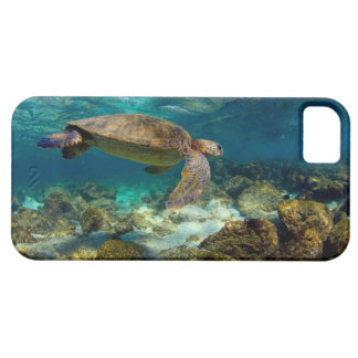 Green sea turtle underwater Galapagos Islands iPhone 5 Case