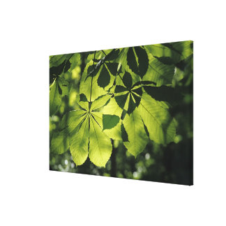 Green Seven Point Leaves with Sun Illumination Canvas Print
