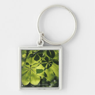 Green Seven Point Leaves with Sun Illumination Key Ring