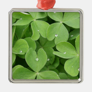 Green shamrock clover leaves Silver-Colored square decoration