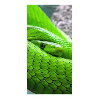 Green Snake Photo Card