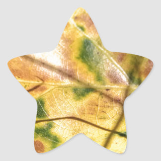 Green speckled yellow leaf in grass star stickers