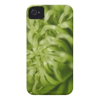 Green Spider Mum Case-Mate iPhone 4 Cases