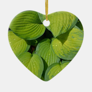 Green spring hosta plant leaves ornaments