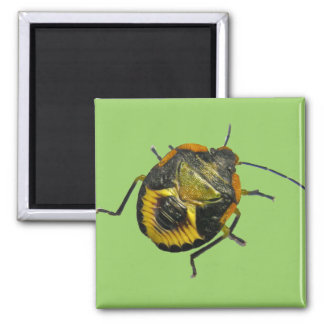 Green Stink Bug Nymph Coordinating Items Square Magnet