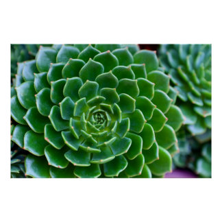 Green Succulent Nature Photography Poster