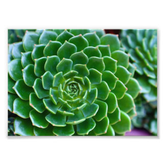 Green Succulent Photograph