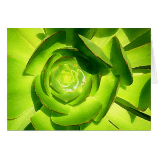 Green Succulent Square by Amy Vangsgard Card