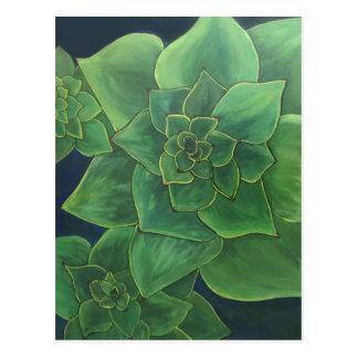Green succulents postcard