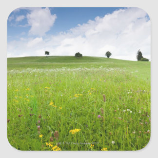 green summer meadows in bavaria, ostallgäu with Square Sticker