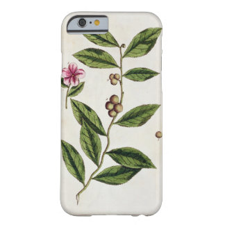 Green Tea, plate 351 from 'A Curious Herbal', publ Barely There iPhone 6 Case