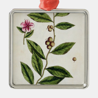 Green Tea, plate 351 from 'A Curious Herbal', publ Christmas Ornament