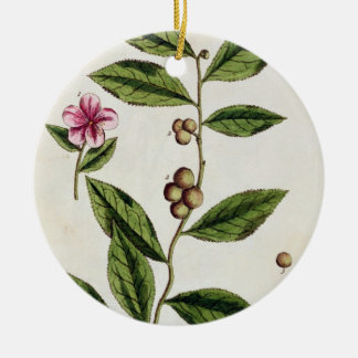 Green Tea, plate 351 from 'A Curious Herbal', publ Round Ceramic Decoration