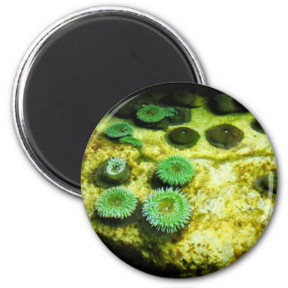 Green Tentacled Magnets