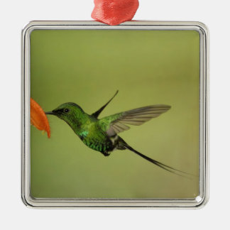 Green Thorntail Hummingbird, Cordillera Christmas Ornament