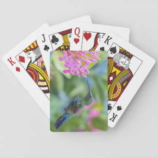 Green Throated Carib Hummingbird Cards