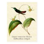 Green Throated Mango Hummingbird Art Postcard