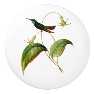 Green Throated Mango Hummingbird Ceramic Knob