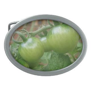Green Tomatoes Belt Buckle