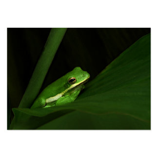 Green Tree Frog ATC Photo Card Business Card Template