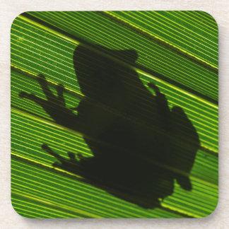 Green Tree Frog (Hyla cinerea) 1 Coasters