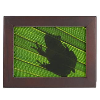 Green Tree Frog (Hyla cinerea) 1 Keepsake Box