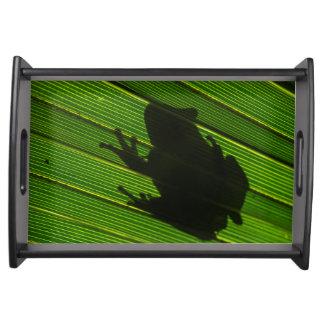 Green Tree Frog (Hyla cinerea) 1 Serving Tray
