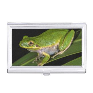 Green Tree Frog (Hyla cinerea) 2 Business Card Holder