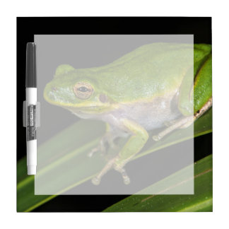 Green Tree Frog (Hyla cinerea) 2 Dry Erase Board