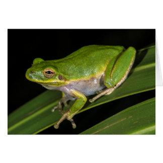 Green Tree Frog (Hyla cinerea) 2 Greeting Card